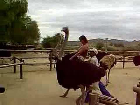 RONDREIS ZUID AFRIKA.EXTRA!Nicole berijdt een struise vogel!