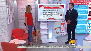 Guide Dog Foundation Answers Questions About Viral Service Dog Tweet