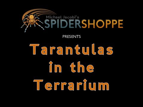 Tarantulas in the Terrarium (An instructional film by Michael Jacobi's SPIDERSHOPPE)