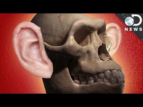 How Did Human Hearing Evolve?