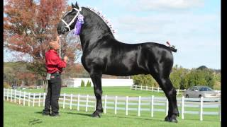 Windermere Farms Percherons Promotional Video