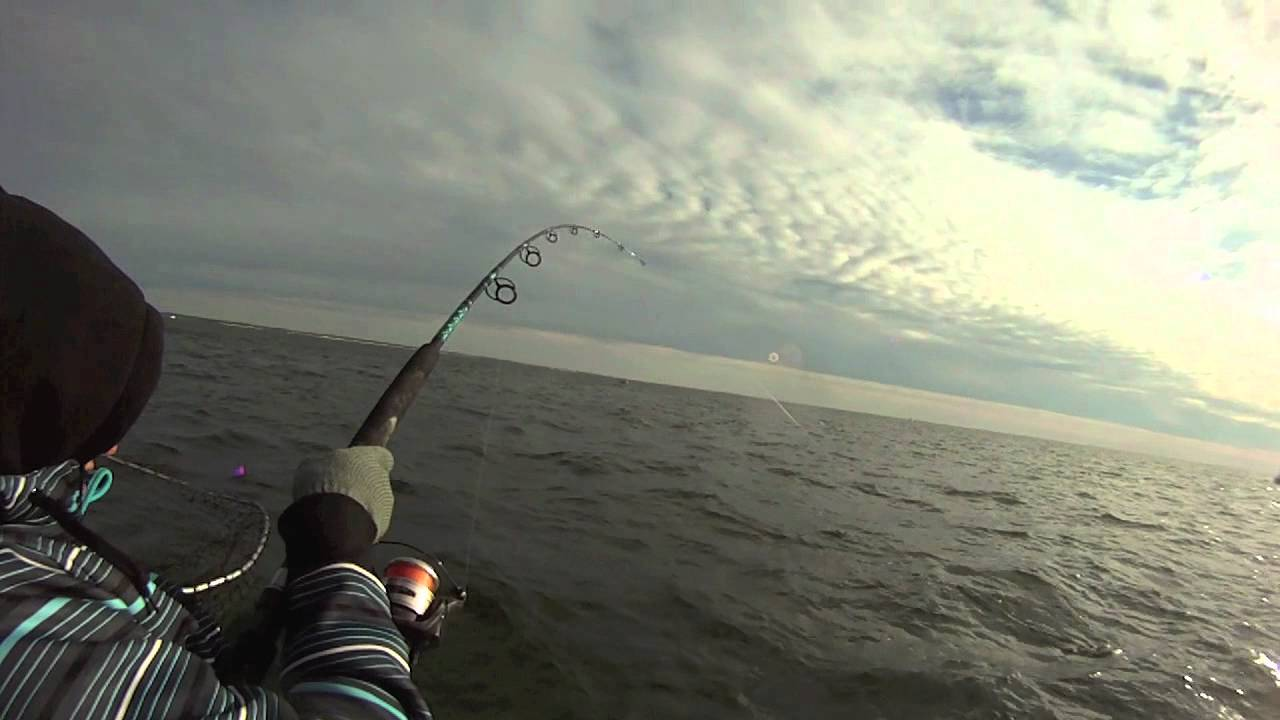 Chesapeake bay striper fishing with captain max king youtube for Striper fishing chesapeake bay