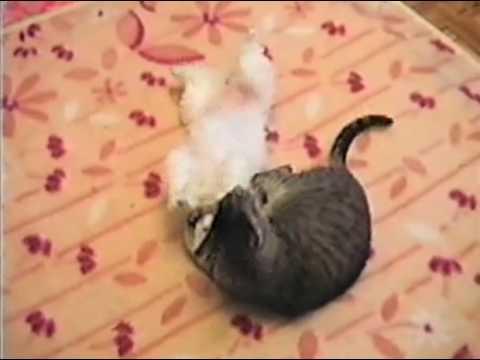 Funny Cat and Puppy(Смешные Кошка и щенок)