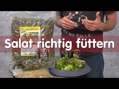 Reptil TV - Technik - Salat richtig füttern