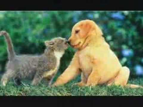 Cute Animals, Why Cant We Be Friends