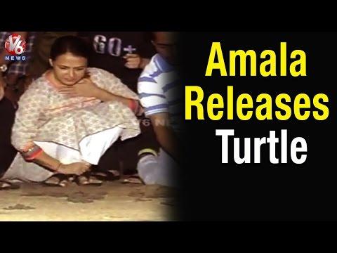 Akkineni Amala release 100 Olive Ridley sea turtles in Vizag beach - Teenmaar News(16-04-2015)