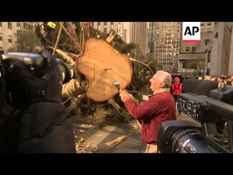 A crane lifted a 76-foot tall Norway Spruce from Connecticut onto its pedestal in Rockefeller Center