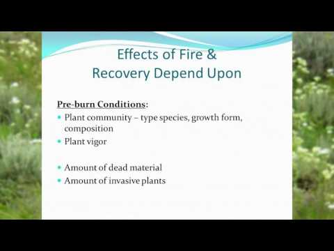 Post Fire Ecology of Range and Pasture- Kevin Guinn