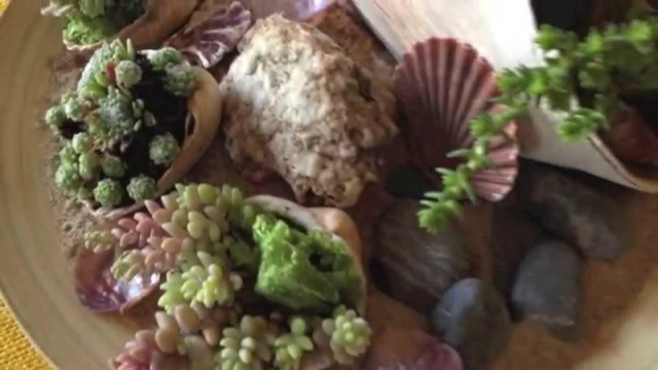 Como crear y decorar un centro marino con plantas crasas y - Como decorar un centro de mesa ...