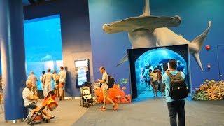 Best Singapore Aquarium Video || SEA Aquarium Singapore || Marine Life Park Sentosa