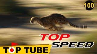 Top 10 Loài Động Vật Nhanh Nhất Thế Giới Mà Con Người Cố Gắng Cỡ Nào Cũng Thua [Top tube 100]