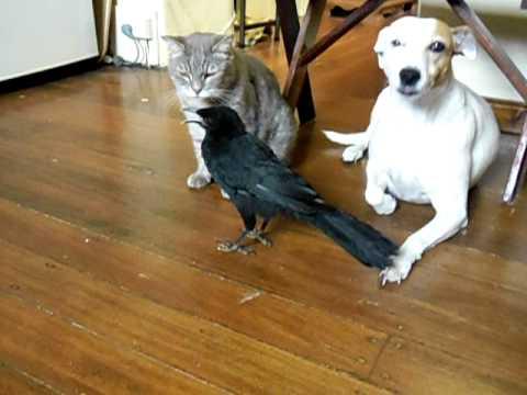BIRD FEEDS CAT & DOG -