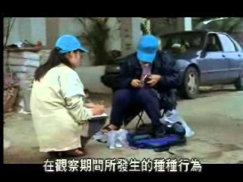 【陽明山國家公園管理處】台灣藍鵲的故事-學術研究過程(一)