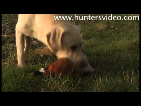 hunting-in-denmark-hunters-video.html