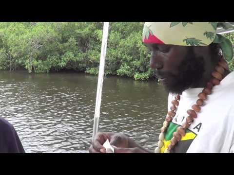 SNOOK FISHING IN NEGRIL JAMAICA