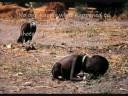 Hard Times, Come Again No More - Thomas Hampson
