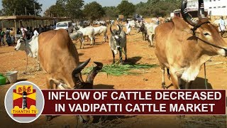 Inflow of Cattle decreased in Vadipatti Cattle Market | Thanthi TV