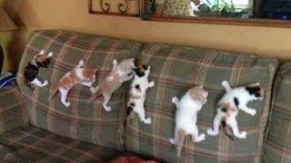 「かわいい猫」 笑わないようにしようとしてください - 最も面白い猫の映画 #197