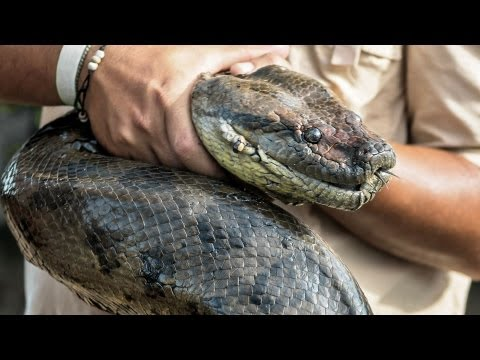 3 Biggest Snakes in the World | Pet Snakes