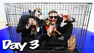 Last to Leave the Dog Cage Wins $10,000! (PawZam Dogs vs. Game Master Inc. Agents in Safe House)