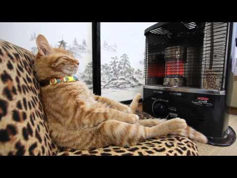ストーブの前の猫 Cat to warm by a heater