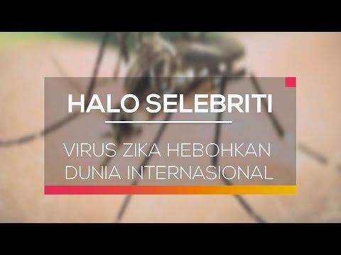Virus Zika Hebohkan Dunia Internasional
