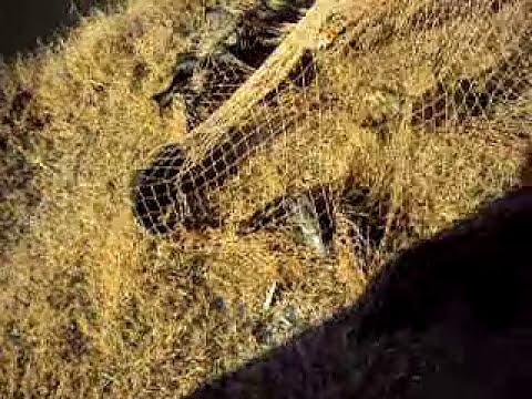 Gran pezca con la red en el Carcarañá (pura mugre)