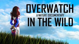 IF OVERWATCH WAS A NATURE DOCUMENTARY