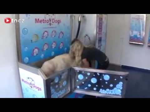 MetroDogs, Self Serve Dog Wash (psí myčka ) - YouTube