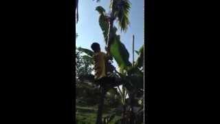 Thánh trèo cây và cái kết bất ngờ