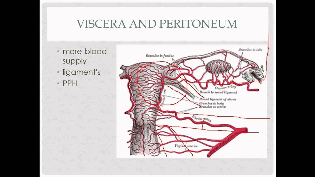 Rotation Anatomy anatomy review - for OB GYN