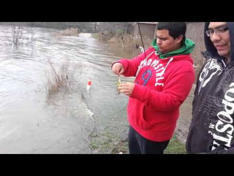 Chicago river fishing 4/19/2013