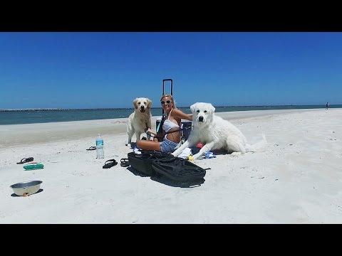 Cooper and Koda go to the Beach! (Super Cooper Sunday #55)