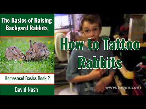 Tattooing Rabbits