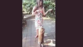 Monkeys getting naugty with girls. Funny animal attack videos
