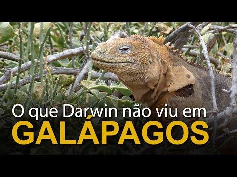 O que Darwin não viu em Galápagos
