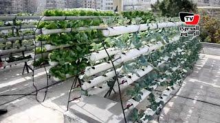 جامعة المنصورة تنظم مهرجان لزراعة الأسطح