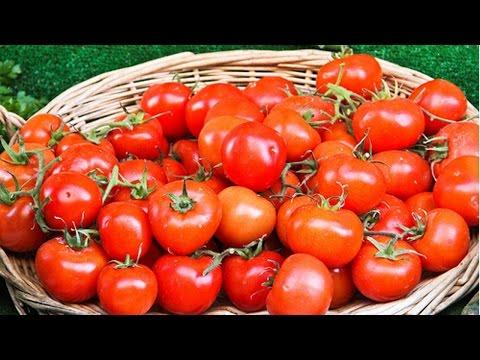 Curso Cultivo Orgânico de Tomate, Pimentão, Abóbora e Pepino - Cultivo de Tomate