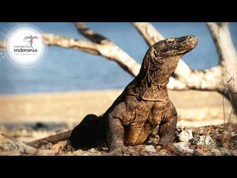 Wonderful Indonesia Komodo Labuan Bajo