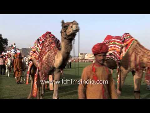 Annual Elephant Festival - Jaipur, Rajasthan