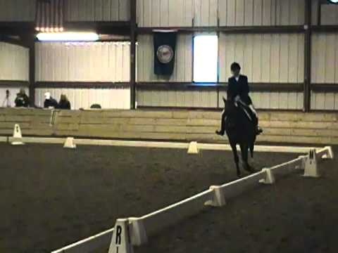Bonsai First Level Test 2 Dressage at Morven Park