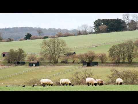 bocketts farm park Weybridge Surrey