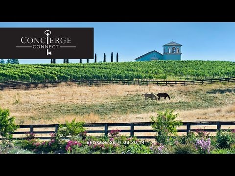 Look Video // Anselmo Vineyards and Seven Hills Ranch // Inwood Valley, CA