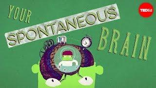 How spontaneous brain activity keeps you alive - Nathan S. Jacobs