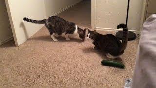 Hilarious Cat Pranks || FailArmy