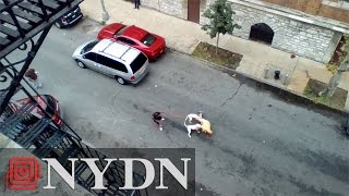 WARNING GRAPHIC: Woman orders pit bulls to attack man in Bronx