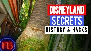 The Dominguez Tree in Adventureland - Disneyland Secrets and History