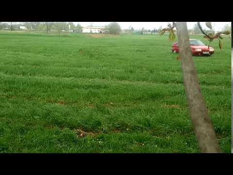 Citroen BX GTi 4WD on the grass