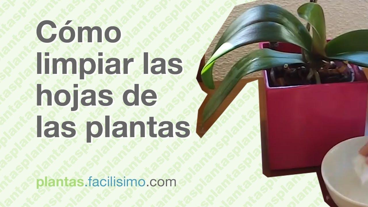 C mo limpiar las hojas de las plantas - Como limpiar la mampara ...