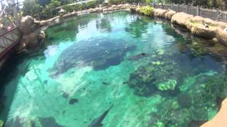 above a massive shark pool!
